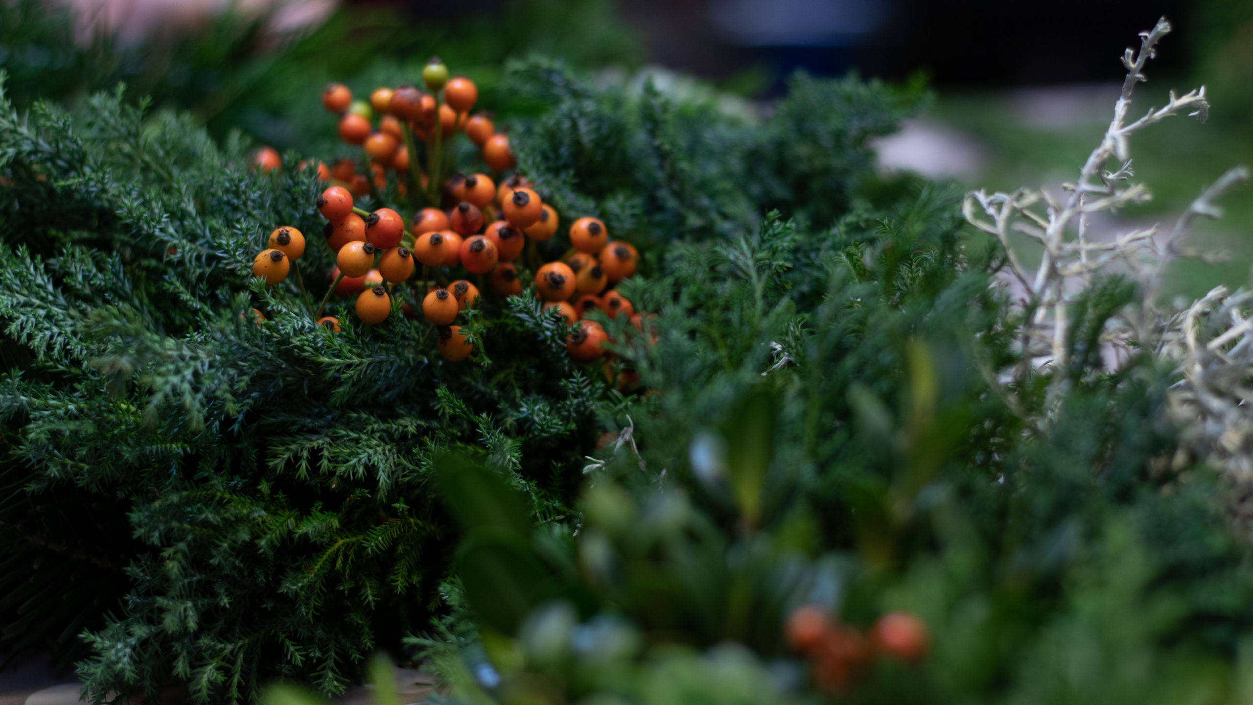 Grünzeug Adventskranz selber machen