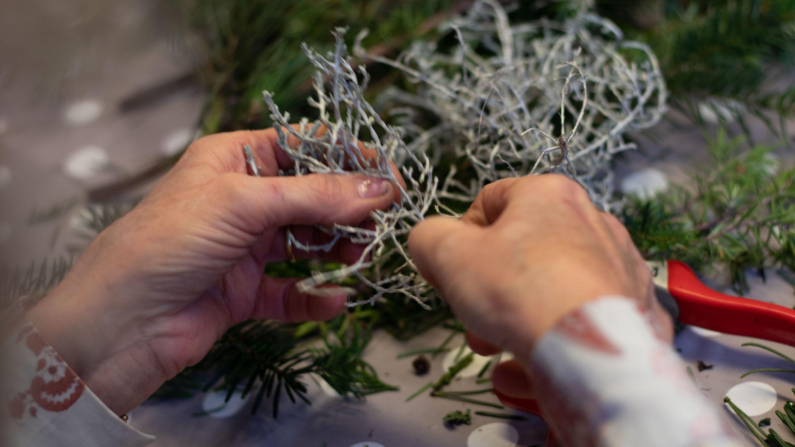 Aeste aussuchen Adventskranz selber machen